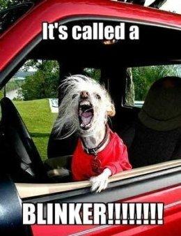 Funny-dog-images_thumb